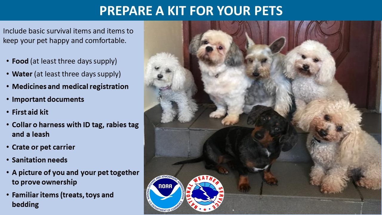 Hurricane Preparedness Dont Forget Your Pets